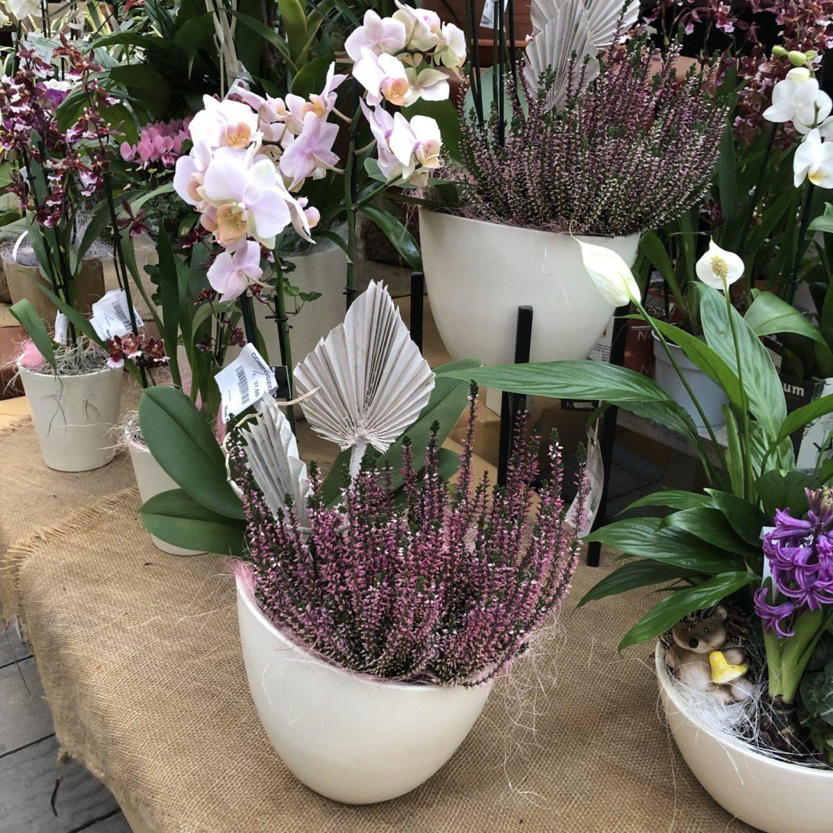 Piante Artificiali Torino : Serra calda garden center quadrifoglio vivaio torino