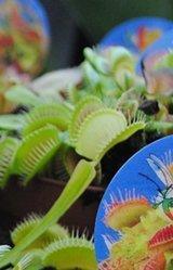 piante-carnivore
