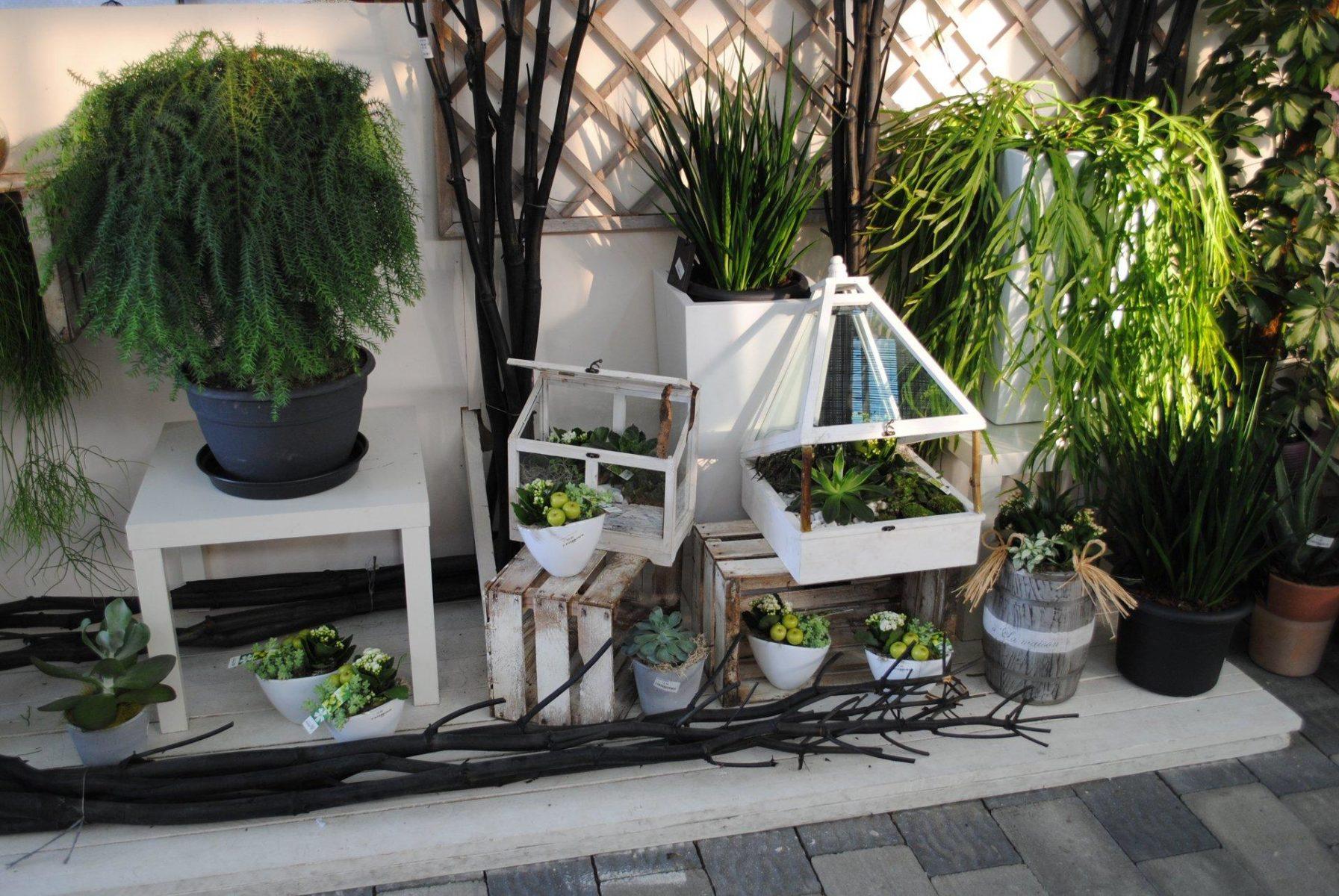 Piante da interno garden center quadrifoglio vivaio torino for Piante da vivaio