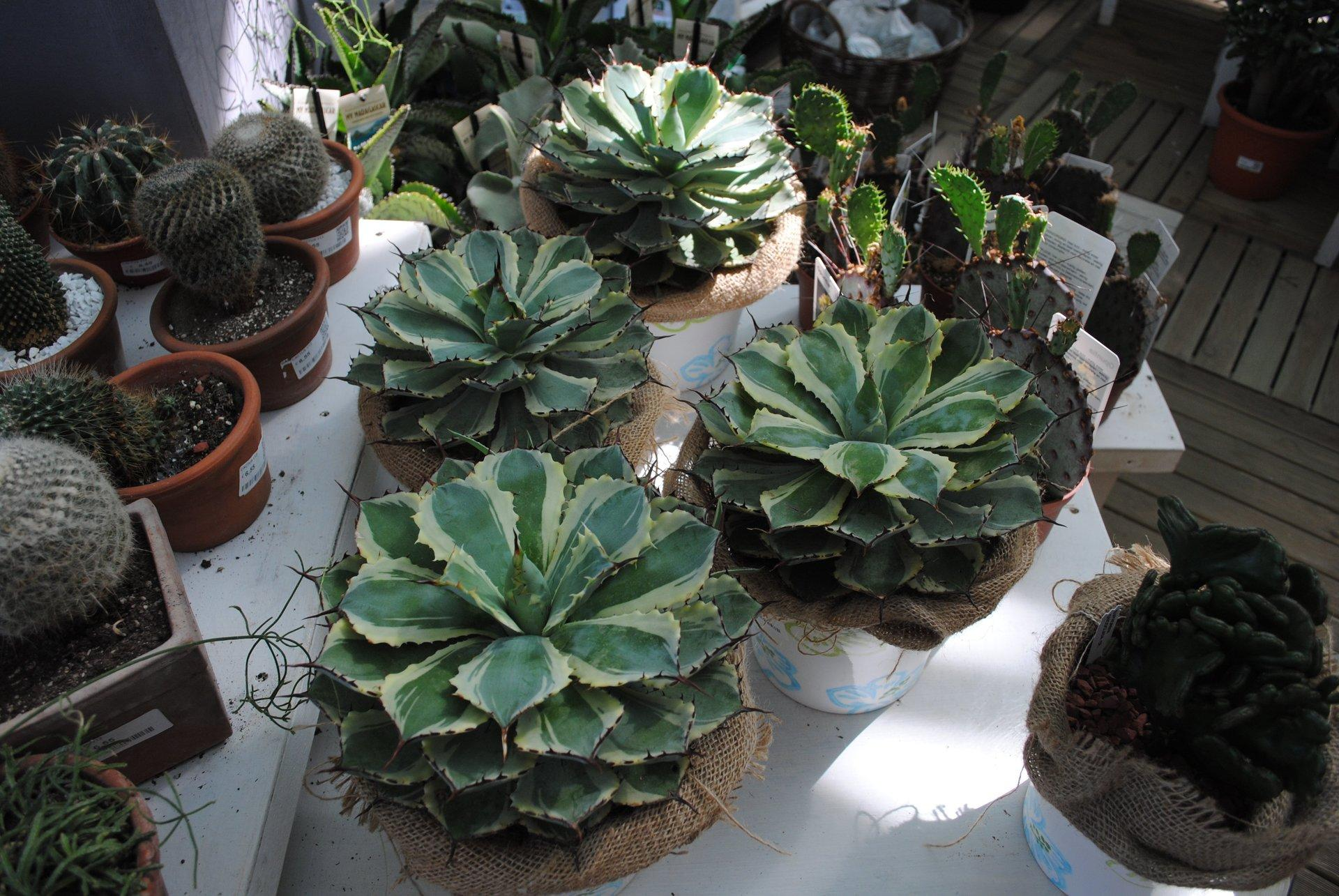 Piante da interno garden center quadrifoglio vivaio torino for Piante acquisto